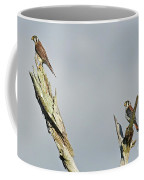 American Kestrel  Coffee Mug
