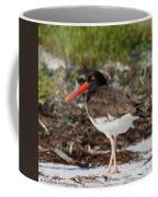 American Oyster Catcher Coffee Mug
