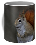 American Red Squirrel Portrait Coffee Mug