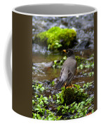 American Robin In Garden Springs Creek Coffee Mug