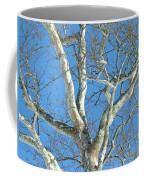American Sycamore - Platanus Occidentalis Coffee Mug