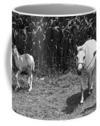 Amish Girl With Her Colt Coffee Mug