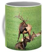 Among The Harem Coffee Mug