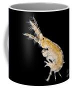 Amphipod Crustacean, Lm Coffee Mug