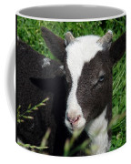 Amy's Lamb Coffee Mug