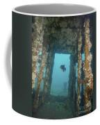 An Atlantic Spadefish Swims Amongst Coffee Mug
