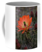 An Orange Beauty Of A Hedgehog  Coffee Mug