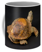 An Ornate Box Turtle With A Fiberglass Coffee Mug