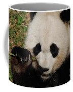 An Up Close Look At A Giant Panda Bear Coffee Mug