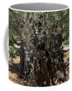 Ancient Olive Tree Coffee Mug