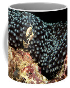 Anemone Crab Coffee Mug