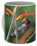 Anna's Hummingbird 1 Coffee Mug