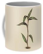 Anoectochilus Striatus Coffee Mug