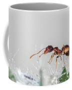 Ant Macro Photography Coffee Mug