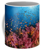 Anthias Fish And Soft Corals, Fiji Coffee Mug by Todd Winner