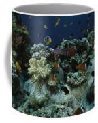 Anthias Fish, Anemonefish And Basslets Coffee Mug