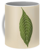 Aphelandra Leopoldii  Coffee Mug