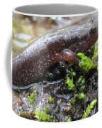 Appalachian Seal Salamander Coffee Mug