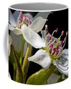 Apple Blossem In Sunlight Coffee Mug