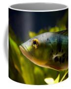Aquarium Striped Fish Portrait Coffee Mug