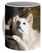 Arctic Curiosity Coffee Mug
