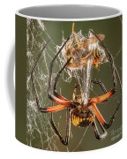 Argiope Spider Wrapping A Hornet Coffee Mug