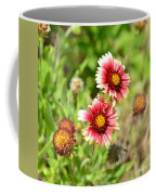 Arizona Sun Blanket Flowers Coffee Mug
