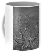 Arizona Sycamore Tree Filtered 022714 Coffee Mug