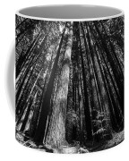 Armstrong National Park Redwoods Filtered Sun Black And White Coffee Mug
