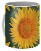 Around The Sunflower Coffee Mug