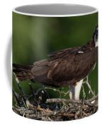 Osprey Portrait Coffee Mug
