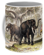 Asiatic Elephant With Young, 19th Coffee Mug