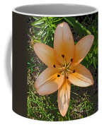 Asiatic Lily With Poster Edges Coffee Mug