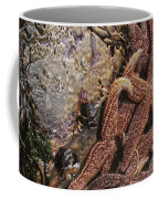 Asteroid Belt Coffee Mug