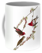 Audubon: Finch, (1827-38) Coffee Mug
