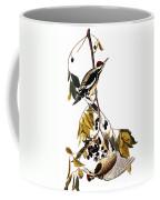 Audubon Sapsucker, 1827-38 Coffee Mug