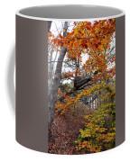 Autumn At Beech Forest Coffee Mug