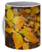 Autumn Beech  Coffee Mug by Michael Peychich
