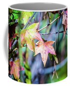 Autumn Color Changing Leaves On A Tree Branch Coffee Mug
