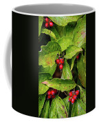 Autumn Dogwood Berries Coffee Mug