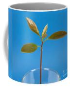 Avocado Seedling Coffee Mug