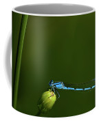 Azure Damselfly-coenagrion Puella Coffee Mug