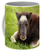 Baby Alaskan Musk Ox Coffee Mug