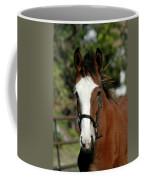 Baby Draft Horse Coffee Mug