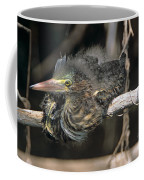 Baby Green Heron Resting On A Branch Coffee Mug