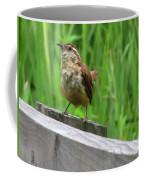 Baby House Wren Coffee Mug