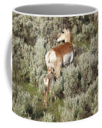 Baby Pronghorn Feeding Coffee Mug