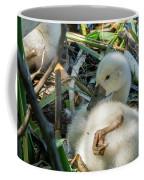Baby Swan Resting Coffee Mug