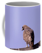 Backside Of A Hawk   Coffee Mug