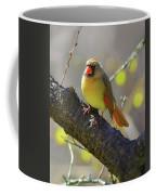 Backyard Bird Female Northern Cardinal Coffee Mug